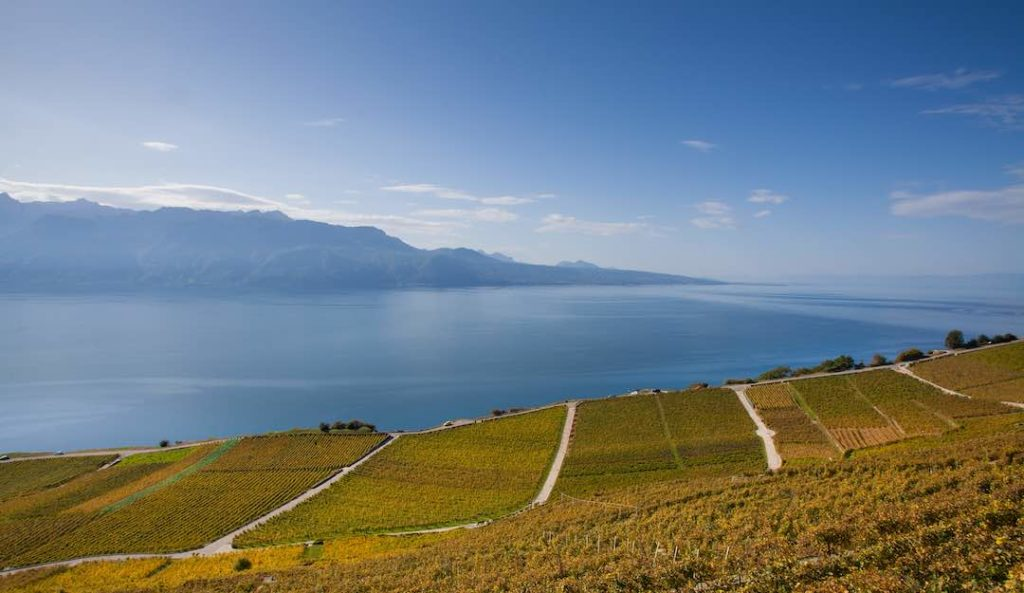 Vineyard in Lake Geneva in October.